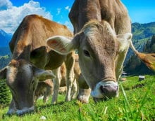 Consumer trust in agriculture is waning