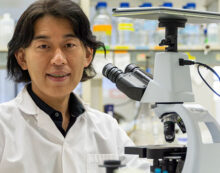 Muscular dystrophy treatment shows promise in cells, animals
